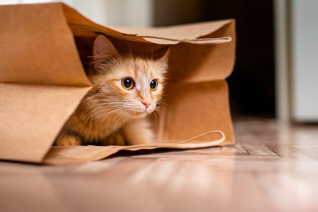 Prepara tu casa para la llegada de un gato