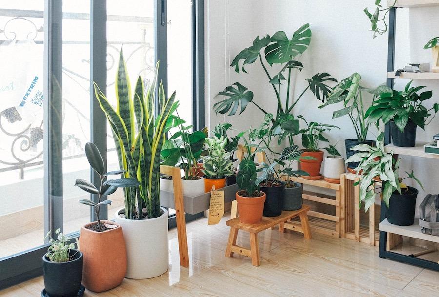 Beneficios de tener plantas en casa